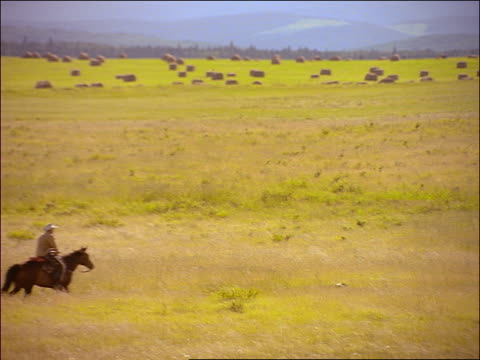 cowboy riding horse through field with hay bales with dog / alberta, canada - herbivorous stock videos & royalty-free footage