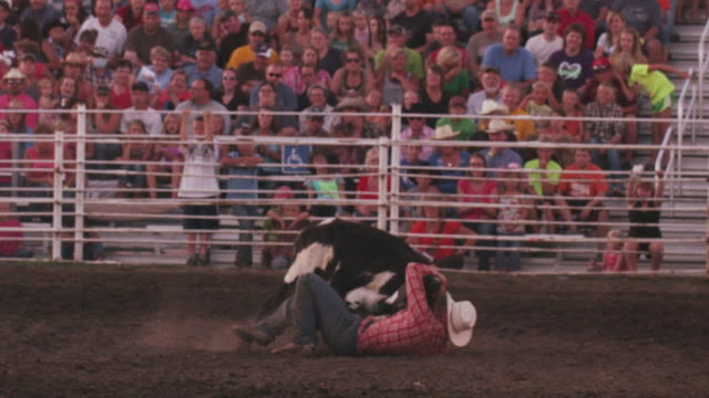 cowboy succeeds in bringing down a steer by the horns at a rodeo - shot in slow motion. - 1 minute or greater stock videos & royalty-free footage