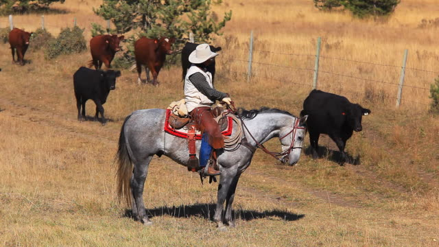 cowboy trail boss supervising cattle drive - rancher stock videos and b-roll footage