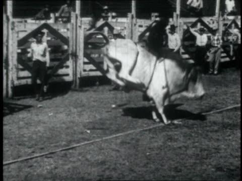 cowboy tries to stay on bucking bull during rodeo but gets thrown off / united states - bocksprång bildbanksvideor och videomaterial från bakom kulisserna