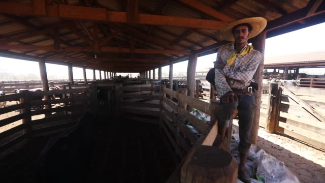 vídeos de stock, filmes e b-roll de cowboy wellington works in the corrall at a cattle feed lot in the amazon on june 28 2017 near chupinguaia rondonia state brazil - amazonas state brazil