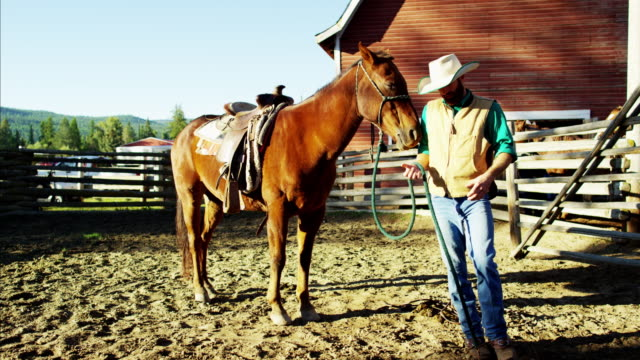 cowboy with horse on dude ranch in corral - bridle stock videos & royalty-free footage