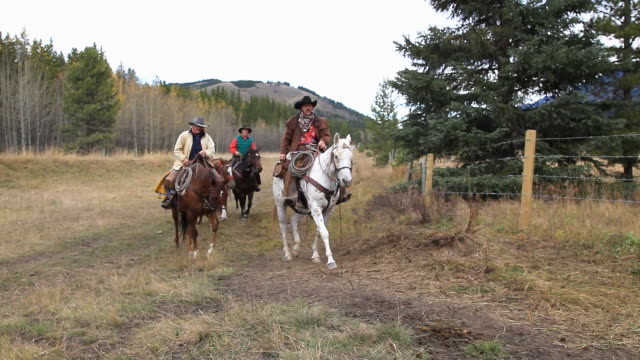 cowboys and cowgirl following last of cattle herd - small group of animals stock videos & royalty-free footage
