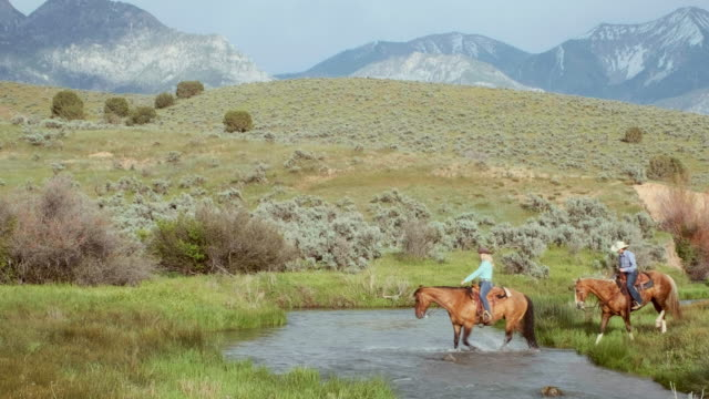 cowboys and cowgirls on horses - recreational horseback riding stock videos & royalty-free footage