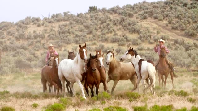 cowboys and horses - rodeo stock videos & royalty-free footage
