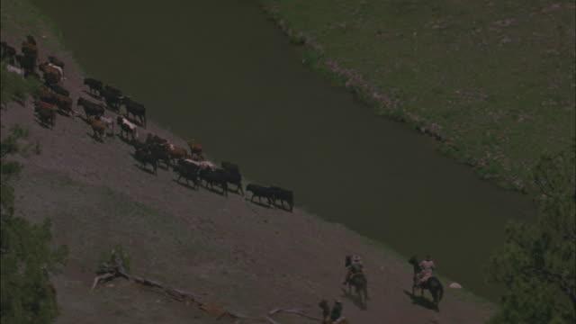 vidéos et rushes de cowboys drive a herd of cattle along a river in a valley. - embarras du choix