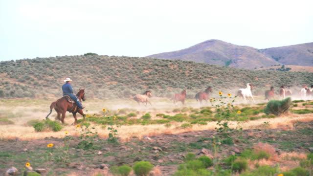 stockvideo's en b-roll-footage met cowboys rijden en oppakken van paarden. - prairie