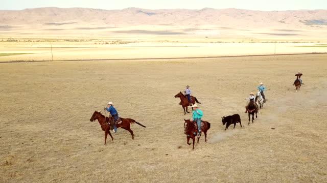 cowboys herding einen stier für das branding - nutztier stock-videos und b-roll-filmmaterial