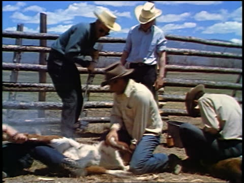 vídeos y material grabado en eventos de stock de 1957 cowboys holding calf down on ground + preparing to brand it - 1957