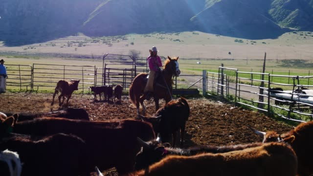 cowboys lassoing calf on ranch - herding cattle stock videos & royalty-free footage
