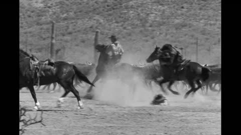 vídeos y material grabado en eventos de stock de cowboys on horseback driving cattle in desert, get shot and fall off horses - western usa