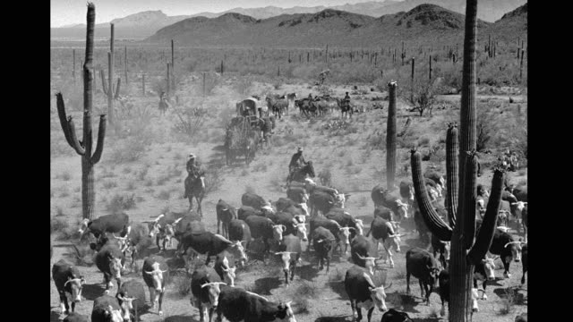 cowboys on horseback herding cattle in desert, horsedrawn covered wagon following. cattle drive in desert on january 01, 1940 - cattle drive stock videos & royalty-free footage