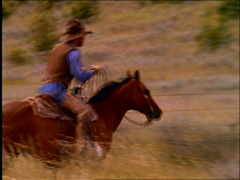 2 cowboys on horses herding cows on plain / montana - cinematography stock videos & royalty-free footage