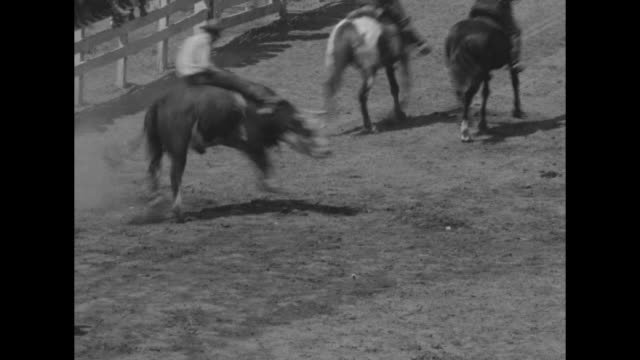 cowboys on horses parading in arena / three shots of cowboys riding steers / note exact day not known - rodeo stock videos & royalty-free footage