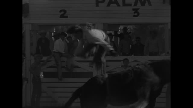 vs cowboys ride bucking broncos and brahma bulls with cutaways to child spectators - bocksprång bildbanksvideor och videomaterial från bakom kulisserna