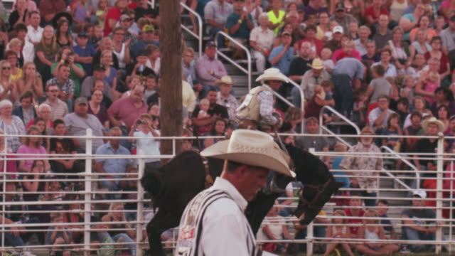 a cowboy's ride comes to an end as he jumps off his bucking horse at a rodeo. - 1 minute or greater stock videos & royalty-free footage