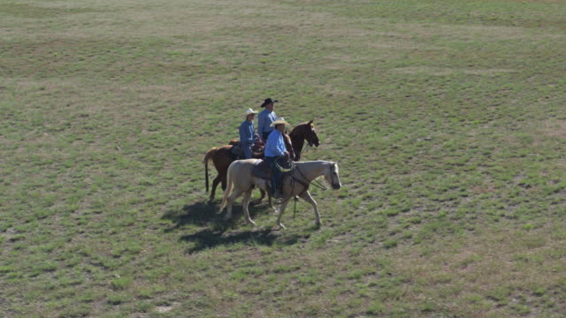 cowboys riding - aerial view - herding cattle stock videos & royalty-free footage