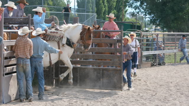 cowboys riding bucking broncos at a rodeo - bucking bronco stock videos & royalty-free footage