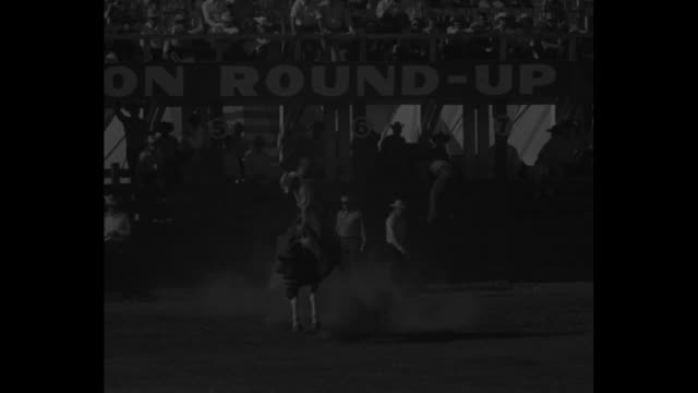 cowboys riding bucking bulls and broncos / lots of fans in stands / cowboy on bucking bull holds on while it spins round and round, finally thrown off - bucking stock videos & royalty-free footage