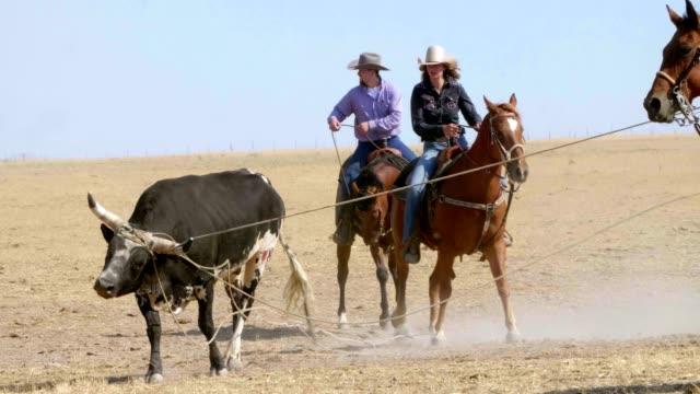 Cowboys moulinette Bull