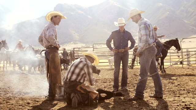 cowboys roping cows for branding - livestock stock videos & royalty-free footage
