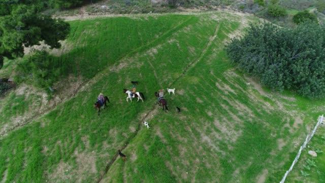 vídeos y material grabado en eventos de stock de cowboys - equitación