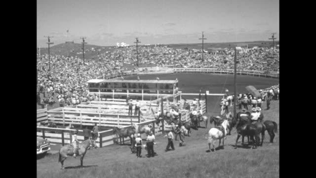 cowboys wrestle with horses as tethered palomino thrashes / cowboys grandstands livestock pens / women in western attire wave at camera / expansive... - bocksprång bildbanksvideor och videomaterial från bakom kulisserna