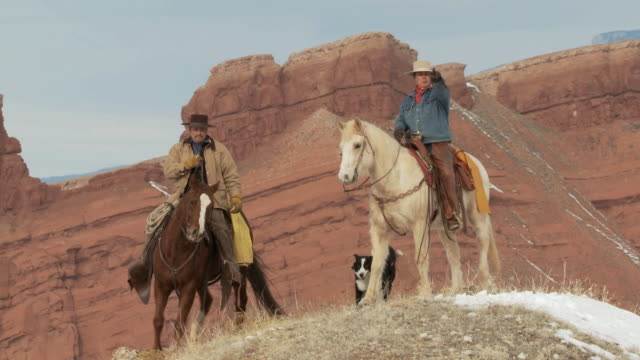 ws cowgirl and cowboy on horseback stop at hilltop with dogs / shell, wyoming, united states - 四匹点の映像素材/bロール