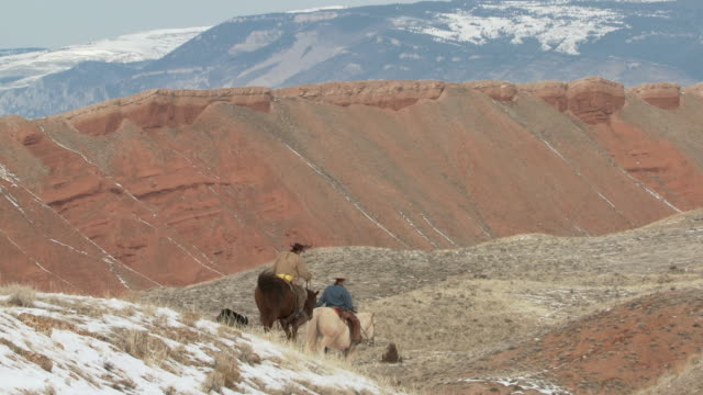 ws cowgirl and cowboy on horseback walking down snowy scenic hilltop with dogs / shell, wyoming, united states - 四匹点の映像素材/bロール