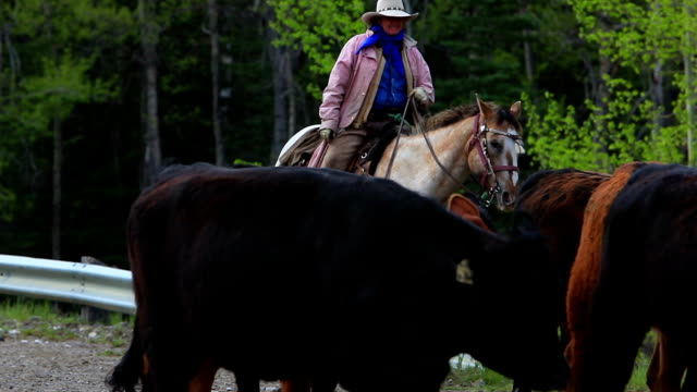 Cowgirl herding cattle