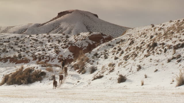vídeos de stock e filmes b-roll de slo mo ws pan cowgirl herding group of horses through snowy landscape / shell, wyoming, usa - pelagem de animal