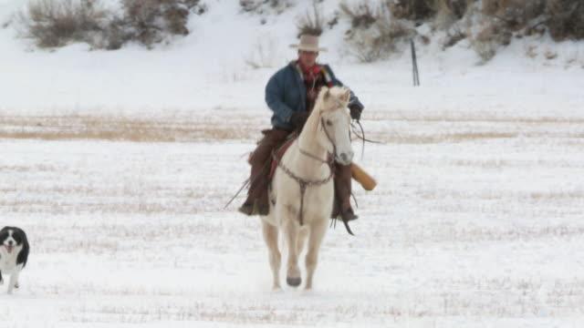 vídeos y material grabado en eventos de stock de ts cowgirl on a horse galloping across field / shell, wyoming, united states - galopar
