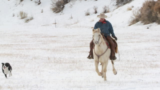 vídeos y material grabado en eventos de stock de ws cowgirl on horseback galloping through snow with a dog following along / shell, wyoming, united states - galopar