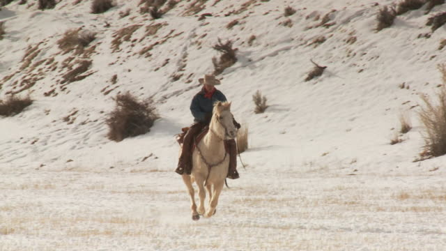 vídeos de stock, filmes e b-roll de slo mo ws pan ms cowgirl riding horse in snowy landscape / shell, wyoming, usa - jaqueta jeans