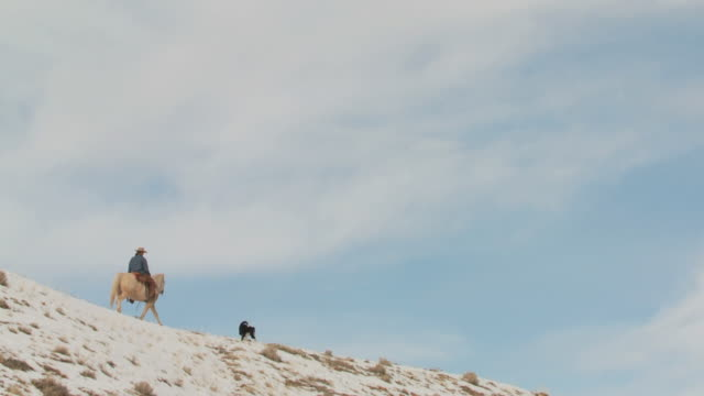 slo mo ws pan cowgirl riding horse on snowy ridge with dog / shell, wyoming, usa - 農林水産関係の職業点の映像素材/bロール