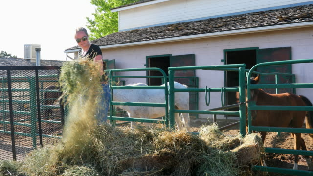 cowgirl shovelling hay to feed horses - fieno video stock e b–roll