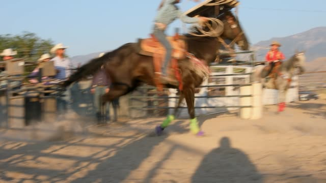 cowgirls compete at steer roping at a sunset dusty rodeo - calf stock videos & royalty-free footage