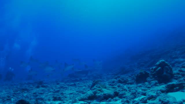 日本でスクーリング海底、石線 - トビエイ点の映像素材/bロール