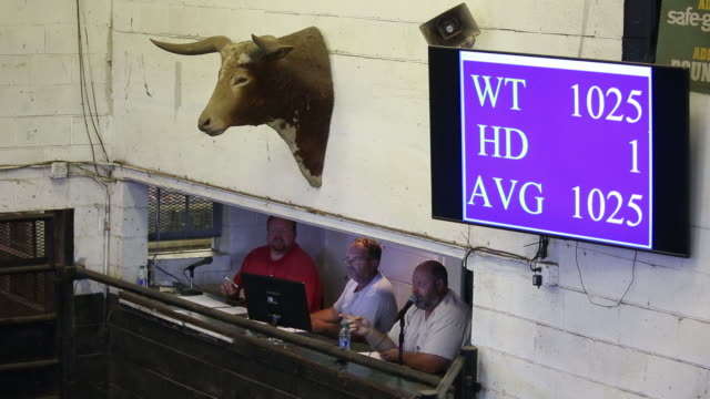cows are displayed for sale during auction at kentucky-tennessee livestock market in cross plains, tennessee, u.s., on monday, july 13, 2020. - stuffed stock videos & royalty-free footage