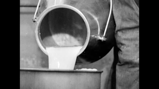 stockvideo's en b-roll-footage met cows drinking fresh water inside the barn / farmer's son pours milk into a can / places can in water bath and turns on the tap fresh milk and running... - zuivelproduct