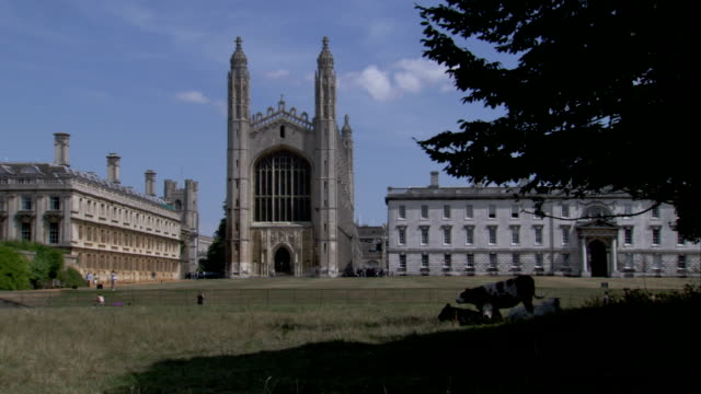 vídeos de stock, filmes e b-roll de cows graze by a shady tree near king's college chapel in cambridge, england. available in hd. - king's college cambridge