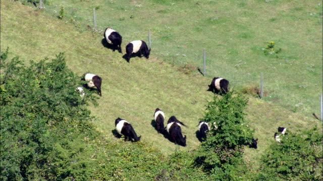 le mucche al pascolo-vista aerea-rhode isola, newport county, stati uniti - vacca video stock e b–roll