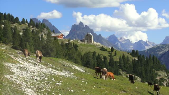 牛の牧草地にハイマウンテンパスチュア - 山小屋点の映像素材/bロール