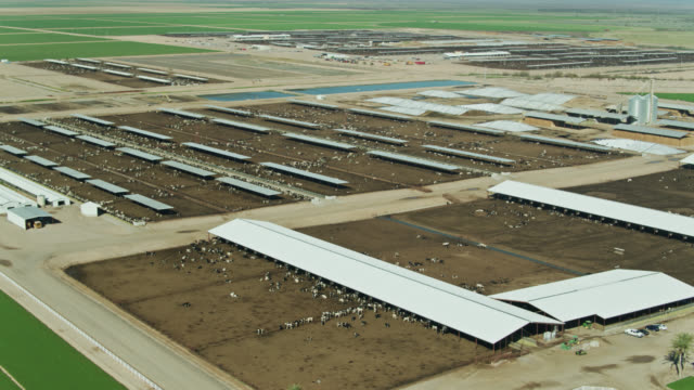cows in feedlot - drone shot - cattle stock videos & royalty-free footage