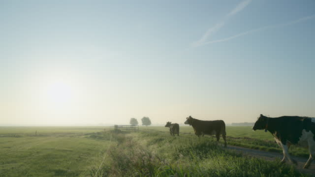 cows in field - small group of animals stock videos & royalty-free footage