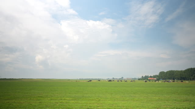 cows in pasture - horizon stock-videos und b-roll-filmmaterial