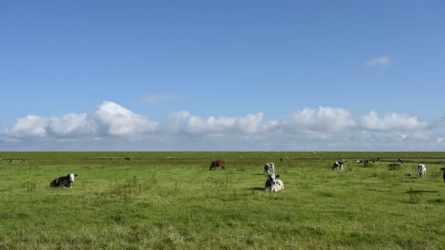 stockvideo's en b-roll-footage met cows in pasture - voeren