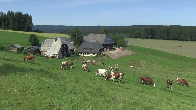 ms cows near farmhouse / guetenbach, baden-wuerttemberg, germany  - farmhouse stock videos & royalty-free footage