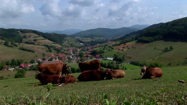 cows_valleyの眺め - シュバルツバルト点の映像素材/bロール