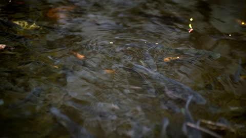 vidéos et rushes de coy pond in the tropics - étang